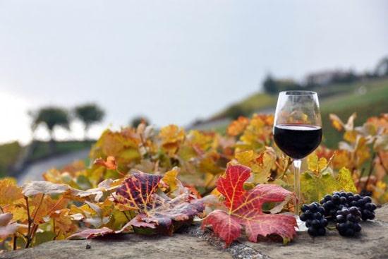 Wine cellar, wine tour in Armenia (7 days /6 nights)